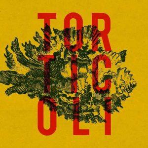 torticoli_st_big